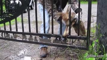 Enlace a Ayudando a Bambi a que vuelva con su madre