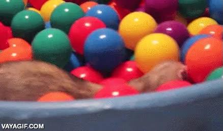 Enlace a Estos hurones no se quejarán de juguetes, tienen hasta una piscina de bolas