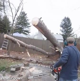 Enlace a Este árbol debió escuchar aquello de: ''Mejor morir de pie que vivir de rodillas''