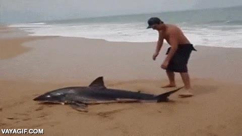 Enlace a Intentando devolver a un tiburón al agua