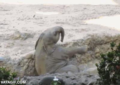 Enlace a Mamá y papá elefante al rescate de su bebé