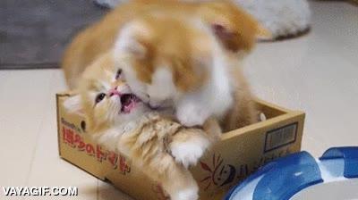 Enlace a Pelea felina atroz