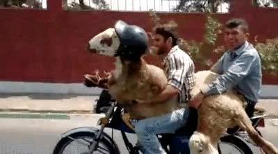 Enlace a ¿Así que en una moto sólo pueden viajar dos personas? Correcto, no hay infracción...