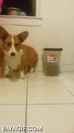 Enlace a La reacción de este perro tras dejarle probar un limón y acercárselo luego
