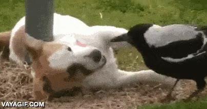 Enlace a Dos amigos jugando sin tener en cuenta diferencias de color, ni especie, ni tamaño