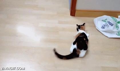 Enlace a Jugar con tu gato mientras pules el suelo y él se lo pasa en grande