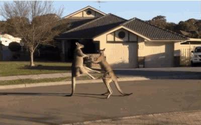 Enlace a Mientras tanto, en una calle de Australia...