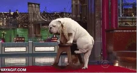 Enlace a Lo que es capaz de hacer este bulldog es increíble