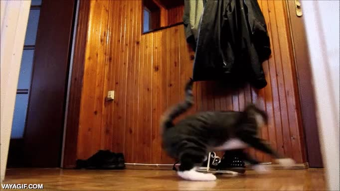 Enlace a Parkour cat