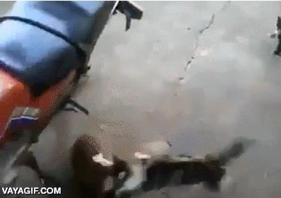 Enlace a En serio, nunca te metas con la cría de una gata, lo pagarás caro