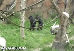 Enlace a ¡Los animales de dos en dos, UA, UA!