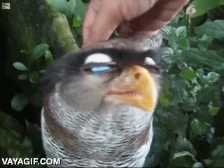 Enlace a Algunas aves sí que disfrutan de las caricias de los humanos