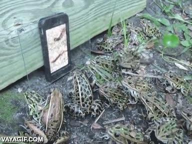 Enlace a Pone un vídeo de un gusano en su móvil delante de un grupo de ranas, ¿qué crees que pasará?