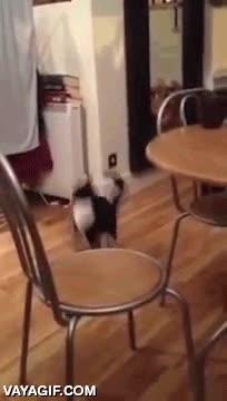 Enlace a ¡Uy sí, mira, soy un humano, no doy de comer a mi gato y camino así!