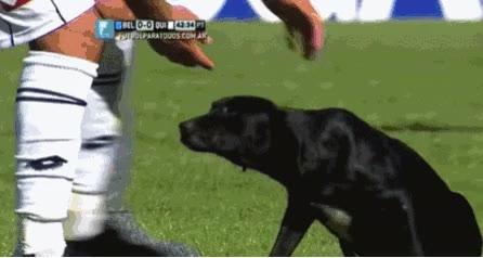 Enlace a Un perrito se cuela en el campo en pleno partido, sólo buscaba un poco de amor