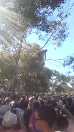 Enlace a El típico notas que se sube a un árbol para hacer la gracia en un festival y...