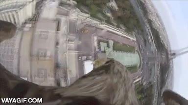 Enlace a Ponle una GoPro a un águila, déjala sobrevolar París y disfruta de las vistas