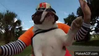 Enlace a Este bulldog tan educado saluda a los moteros con los que se cruza