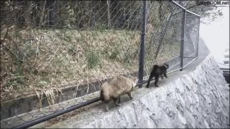 Enlace a ¡Aparta lento, que tengo prisa!