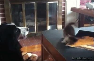 Enlace a Ese día el gatito aprendió a mirar dónde ponía sus patitas