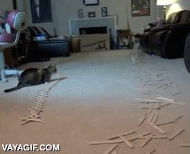 Enlace a El gato no parece muy afectado por lo que acaba de presenciar
