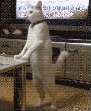 Enlace a ¡Oh no, me han descubierto! Mejor vuelvo a actuar como un gato normal...