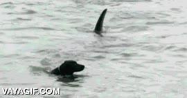 Enlace a Nada da más miedo que ver una aleta en el agua acercarse hacia ti y este perro lo sabe