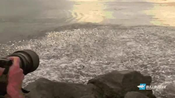 Enlace a Un banco de peces tan grande que hasta genera su propia ola