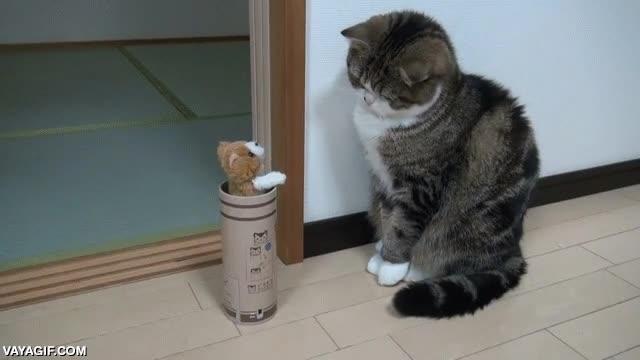 Enlace a Gatos que se asustan con efecto retardado