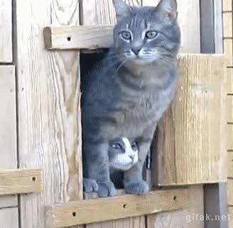Enlace a ¡Tío ven, tienes que ver esto!
