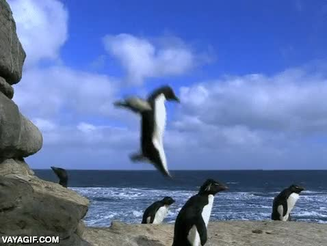 Enlace a El salto del tigre, nivel: pingüino