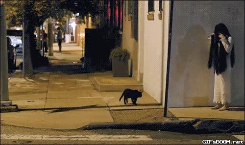 Enlace a Sabes que tu disfraz de Halloween es bueno cuando se asusta hasta un gato negro