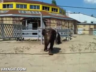 Enlace a Cuando un elefante se cansa de las visitas