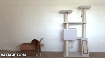 Enlace a La mágica atracción de las cajas de cartón para los gatos