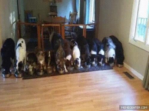 Enlace a Esto es tener bien adiestrado a tu ejército de perros
