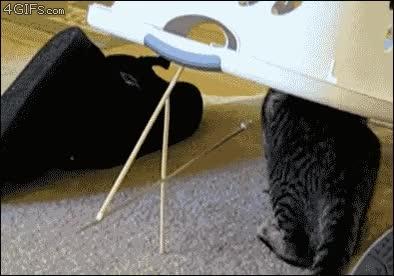 Enlace a Los gatos, tan listos para algunas cosas, pero para otras...