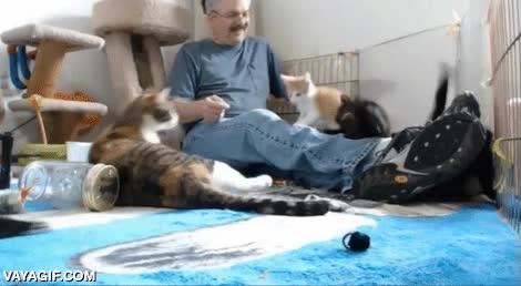 Enlace a Reacción en cadena felina
