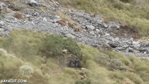 Enlace a Fíjate bien, ¿crees que podrías cazar algo en esta ladera?