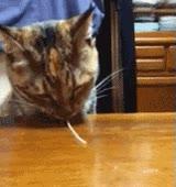 Enlace a ¿Habías visto alguna vez a un gato comerse un espagueti?