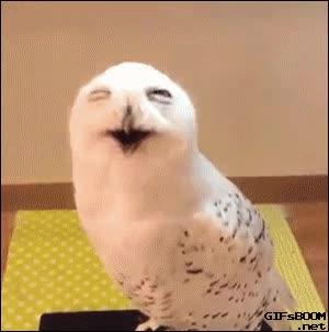 Enlace a Nunca había visto a una lechuza partirse de risa de esta manera