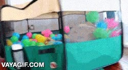 Enlace a ¡Pon un carlino en una piscina de bolas y que se desate la locura!