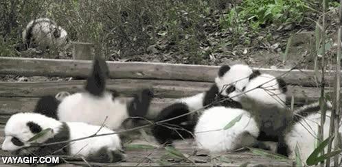 Enlace a Y por esto Kung-Fu Panda no es un concepto muy realista