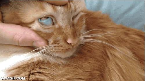 Enlace a Para los que no se creen que los gatos tienen un tercer párpado
