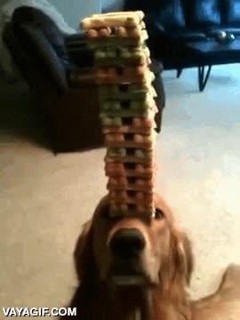 Enlace a El mejor perro equilibrista del mundo