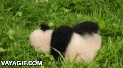 Enlace a Huir haciendo la croqueta, nivel: panda