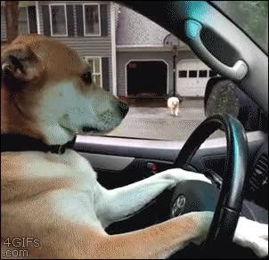 Enlace a Mi perro tiene hoy una cita, no sé qué quiere hacer pero me ha pedido el coche