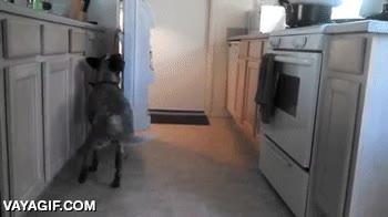 Enlace a No se me ocurre un truco mejor que enseñarle a tu perro
