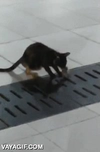 Enlace a Ni las rejillas estrechas son un sitio seguro para un ratón con este gato cerca