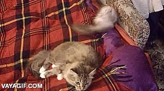 Enlace a Agente Hurón en misión especial ''Echar al gato'', ¡conseguido!