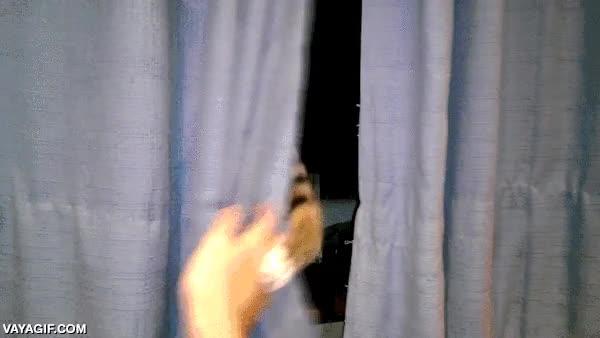 Enlace a Voy a abrir las cortinasNO!